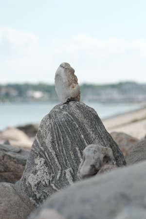 Stone figures on the beach