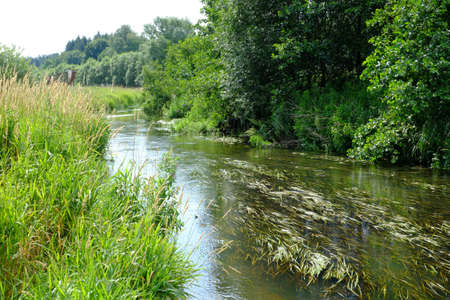 Lonely stream in the nature reserve Standard-Bild