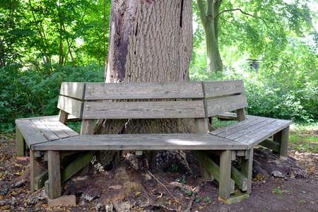 Bench around a tree trunk