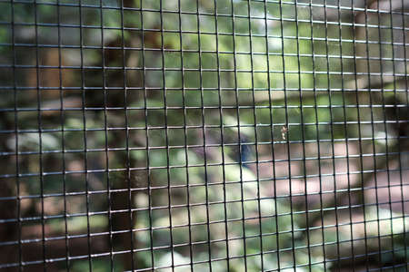 Old grid on the animal enclosure