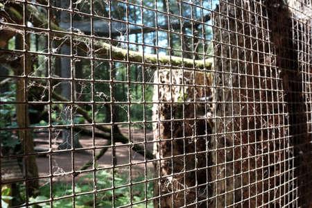 Wire mesh on a chicken coop