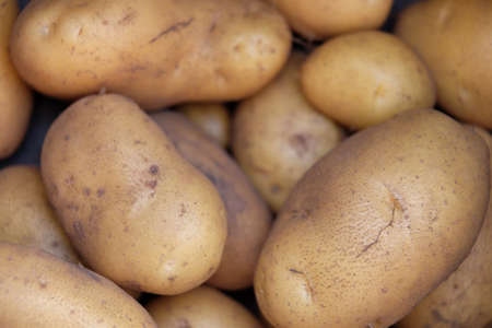 Harvested potatoes, fresh from the field
