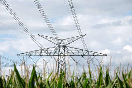 High voltage power lines cross a corn field