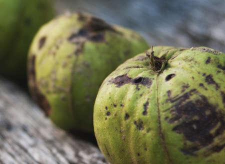 Green Crab Apples