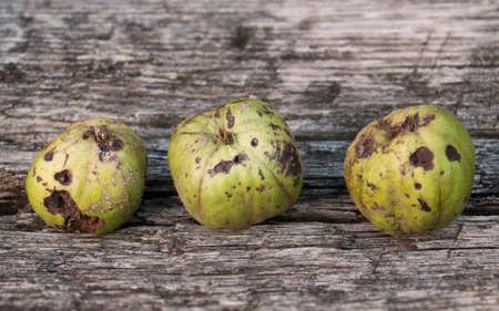 Three Green Crab Apples Stock Photo