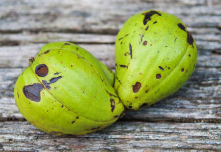 hickory nuts: Two Green Hickory Nuts