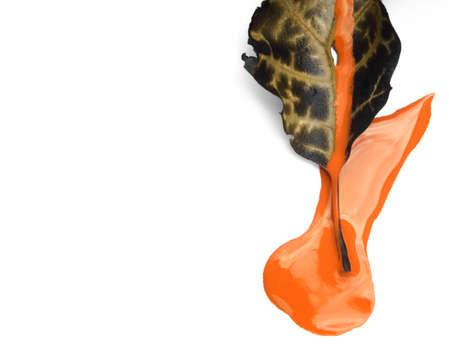Leaf stuck in wet orange paint