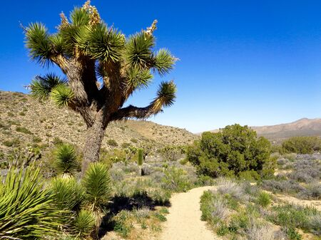 joshua tree national park: Hiking trail in Joshua Tree National Park