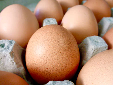 egg carton: Brown eggs in egg carton Stock Photo