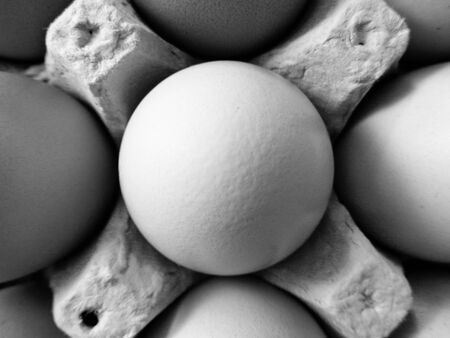 egg carton: Black and white photo of brown eggs in egg carton