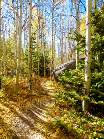 Hiking trail through colorful aspen forest in full fall colors Stock Photo