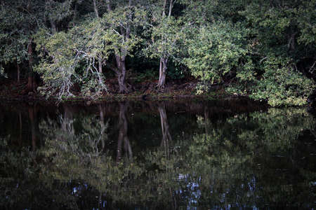 This sloping arch of lush foliage is reflected on the dark calm water within the woodland