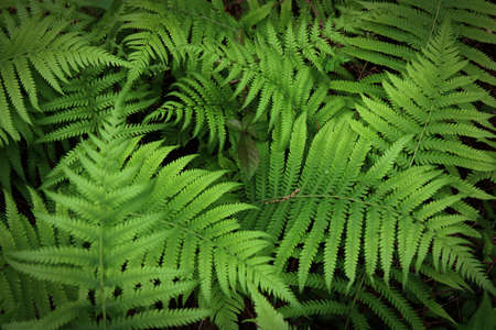 large fern fronds surround small leaves