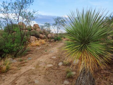Arizona Desert Hiking Trail Under Blue Sky with Yucca and Palm
