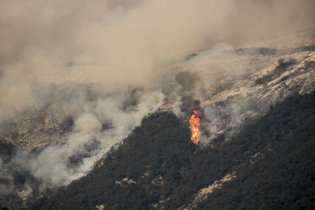 Towering Flame Burning Trees in Carpinteria California During Thomas Fire