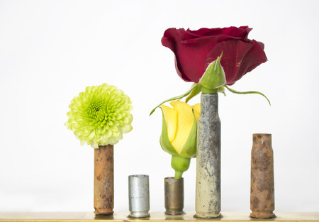 Rusted Empty Bullet Shells or Casings Hold Flowers and Roses on White Background Stock Photo