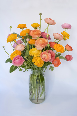 Bouquet of Ranunculus Flowers on White Background