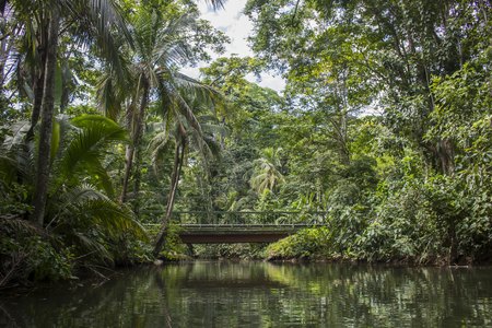 Jungle Landscape Reflecting in Water Stock Photo
