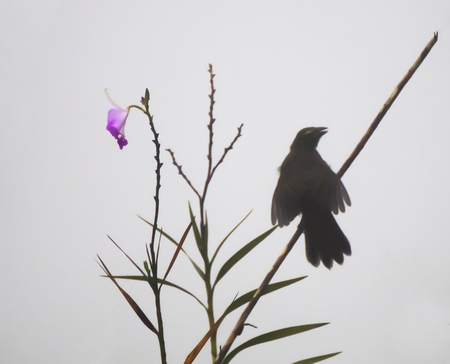 Close Up Pink Flower with Silhouette of Bird in Background