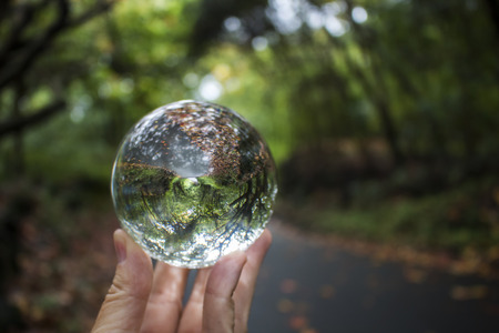 Green Tree Lined Road with Fall Leaves Captured in Glass Ball