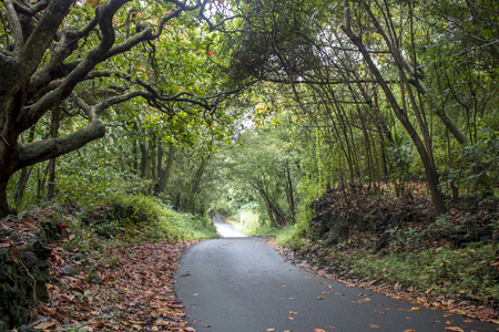 Single lane road leads through green arched trees with fall leaves