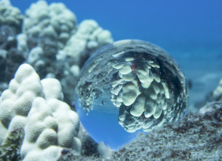White Coral Captured in Reflection in Glass Ball