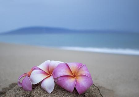 Cerrar flores tropicales en la playa bajo el cielo tormentoso