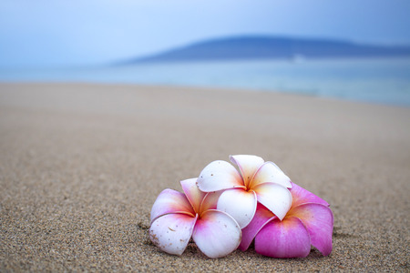 Bright Colored Flowers on Beach Close Up with Island and Sea in Background
