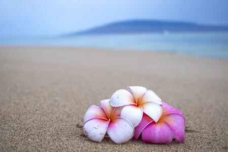 Flores de colores brillantes en la playa de cerca con la isla y el mar de fondo