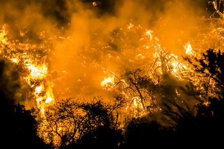 Las llamas anaranjadas brillantes llenan la imagen de la ladera en llamas durante un incendio en California