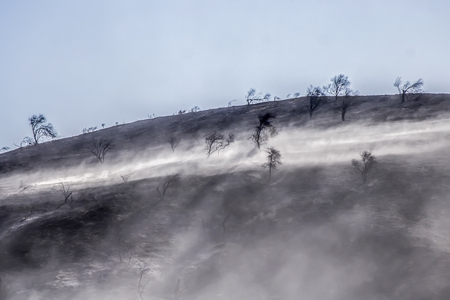 Aftermath of Wildfire with Blackened Landscape and Burned Trees and Ash Blowing in Wind Stock Photo