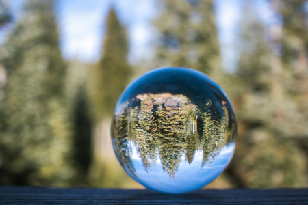 Pine Forest Grove Captured in Glass Ball Reflection