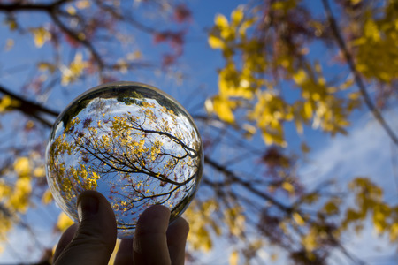 Glass ball captures lines colors and shapes in tree branches and leaves.  Image looking skyward with sky and clouds in background.  Captured in glass ball reflection held in fingertips in unique conceptual image. Imagens
