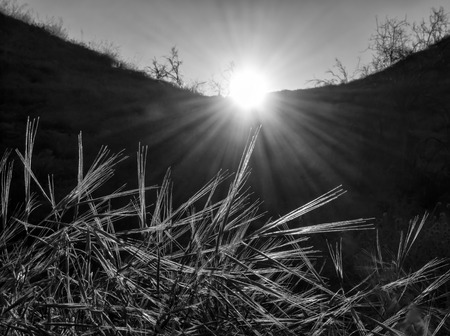 Sun rays shine on grasses in conceptual black and white daybreak image.