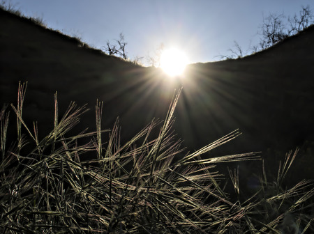 Sun rays at sunrise shine onto grasses making them glow. Stock Photo
