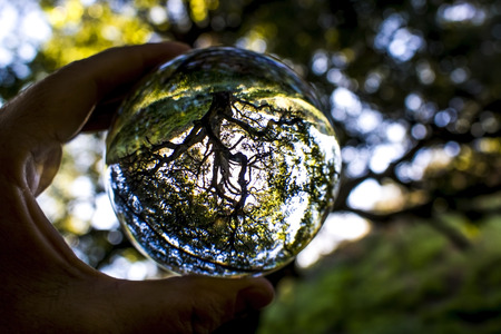 California Oak tree that survived fire on green hillside with fresh growth captured in glass ball. Stock Photo