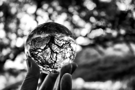 Oak tree in black and white captured in glass ball. Stock Photo