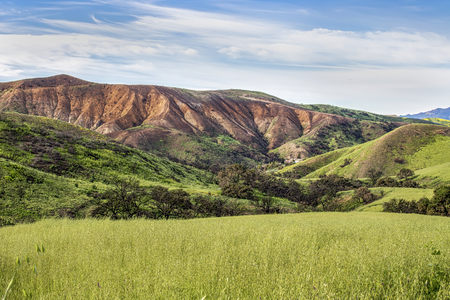 Fields and hillsides with fresh spring growth under burned foothills and blue sky in Caliifornia.
