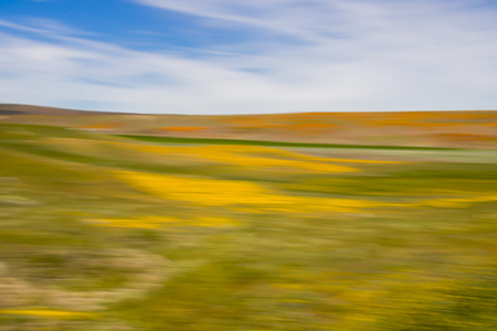 Color study of California desert blooming with brightly colored wildflowers in yellow green and orange under blue sky.  Abstract motion blur image. Stock Photo