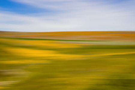 Yellow orange and green vibrant colors under blue sky in conceptual look at blooming wildflowers using motion blur. Stock Photo