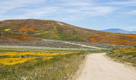 Dirt road through landscape of hillsides and wildflowers in orange, yellow and green under blue sky with clouds.
