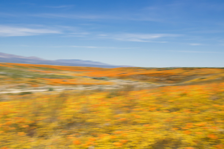 Motion blur color study of California desert blooming in brightly colored wildflowers under blue sky. Stock Photo