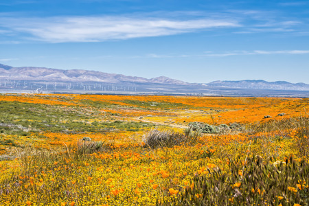 California landscape with blooming wildflowers in yellow and orange, hills and wind turbines. Stock Photo