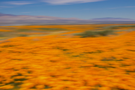 Conceptual motion blur field of bright orange poppy wildflowers with mountains in background under blue sky.
