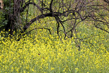 Yellow wildflowers and orange butterflies take over burned black tree from California fires.