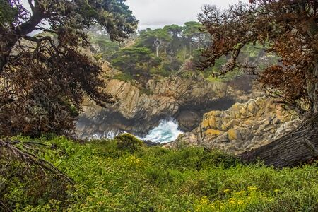 Blue ocean surges on California coast with Cypress trees and spring flowers.