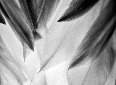Points and petals in close up black and white detail. Shapes emphasized in nature macro image. Stock fotó