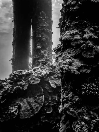 Rows of coral crusted pier underwater in black and white conceptual image. Imagens
