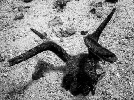Strange antler sitting on ocean floor in black and white with single small fish on horn.
