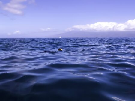 Sea turtle head emerges from ocean surface to breathe.  Image taken in Hawaii. Stockfoto